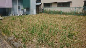 広島市西区己斐西町の土地の写真